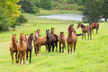 Horse herd on the pasture Stock Photo