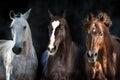 Horse herd portrait Royalty Free Stock Photo