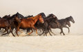 Horse herd run Royalty Free Stock Photo