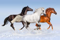 Horse herd run in winter Royalty Free Stock Photo