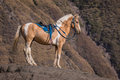 Horse in the hill bromo mountain indonesia Stock Photos