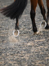 Horse hoof an abstract shot of a trotting showing its shoe Stock Image
