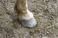 Horse hoof stands on ground Stock Photos