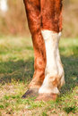 Horse hooves a pair of Royalty Free Stock Photos