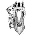 Horse, hoss, knight, steed, courser Wild animal wearing rugby helmet Sport illustration