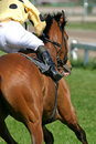 Horse and jockey Royalty Free Stock Photo