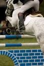 Horse Jumping 021 Royalty Free Stock Photo