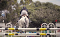 Horse jumping competition del mar california the back side view of a and rider over an obstacle on a course in an equestrian Stock Photo