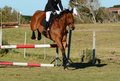 Horse jumping a jump Royalty Free Stock Photo
