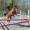 Horse jumps alone brown without rider Royalty Free Stock Photo