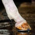 Horse legs washing Stock Images