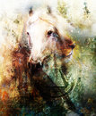 Horse and lion heads, abstract ocre background Royalty Free Stock Photo