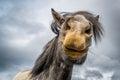 Horse Lips Royalty Free Stock Photo