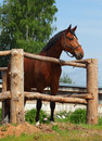 Horse looking over fence in paddock wooden stud farm Stock Images