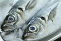 Horse mackerel Royalty Free Stock Photo