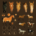 Horse markings clip art illustrations of facial and leg primitive of dun coat coloring also variations of some rare coat Stock Photography