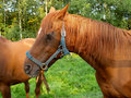 Horse in meadow Royalty Free Stock Photos