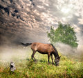 Horse in a meadow Royalty Free Stock Photo