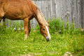 Horse in meadow. Meadow grazing horse Royalty Free Stock Photo