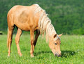 Horse meadow summer day Stock Images