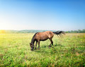 Horse in a meadow on sunny spring morning Royalty Free Stock Photography