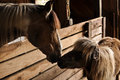 A horse and a miniture horse touching noses in barn Royalty Free Stock Photo