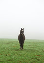Horse in the mist on a meadow Royalty Free Stock Photo