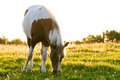 Horse in the morning light Royalty Free Stock Photo