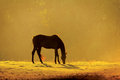 Horse in the morning on a meadow at dawn Stock Images