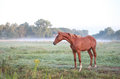 Horse on morning pasture Royalty Free Stock Photo