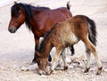 Horse mother and baby ,at zoo Stock Photos