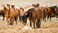 Horse Mother Stands over Tired Colt Foal Offspring Royalty Free Stock Photo