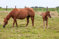 Horse this mother with young standing in pasture by curiosity alone the young looking at me Stock Image