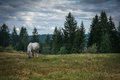 Horse on the mountain plain. Royalty Free Stock Photo