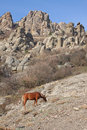 Horse in mountains chestnut at fall Stock Images