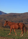 Horse in mountains chestnut walking on path Royalty Free Stock Photo