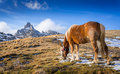 Horse in the mountains grazing romania Royalty Free Stock Photography