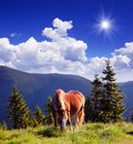 Horse in the mountains summer landscape with a Royalty Free Stock Photography