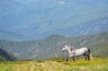 Horse in the mountains summer landscape with a gray a mountain valley Royalty Free Stock Photography