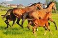 Horse nature Royalty Free Stock Photo