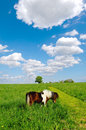 Horse in nature Royalty Free Stock Photography