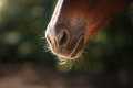 Horse On Nature. Portrait Of A...