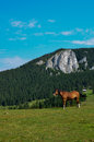 Horse In The Nature