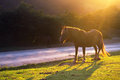 Horse near a road with sunset back light Royalty Free Stock Photos
