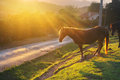 Horse near road with sunset back light a Royalty Free Stock Photography