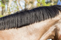 Horse neck groomed closeup for show jumping Stock Image