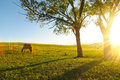 Horse in nightfall a eating grass with trees and shadows Stock Photography