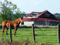 Horse and Old Barn Royalty Free Stock Photos