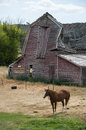 Horse and Old Barn Royalty Free Stock Photo
