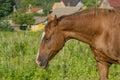 Horse on open pasture.
